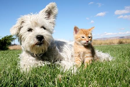 Wonderlijk Hoesten bij hond en kat | NML health YW-14