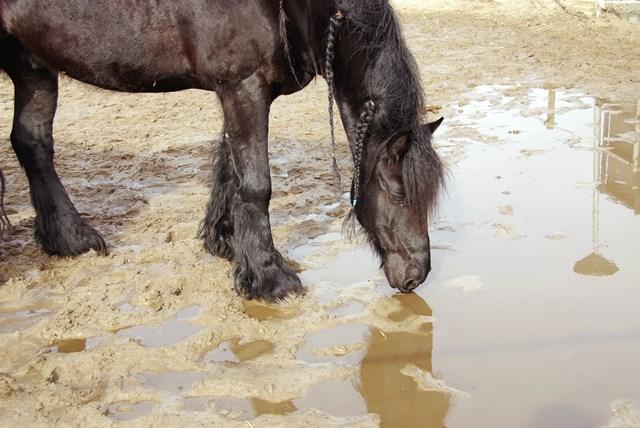 zandetend paard web