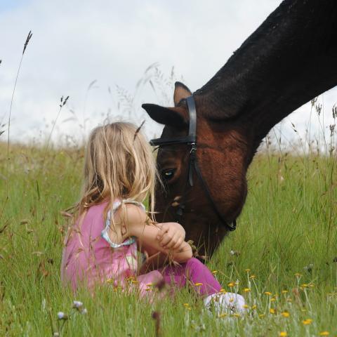 meisje met paard in de wei