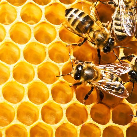 Werking medicinale honing opnieuw bewezen_Vetramil