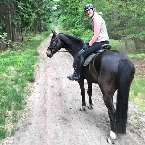 vakantie, paard, op reis, dier, weekendje weg