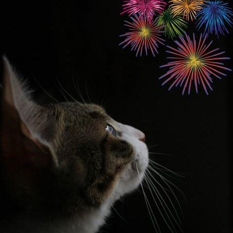 kat kijkt naar vuurwerk