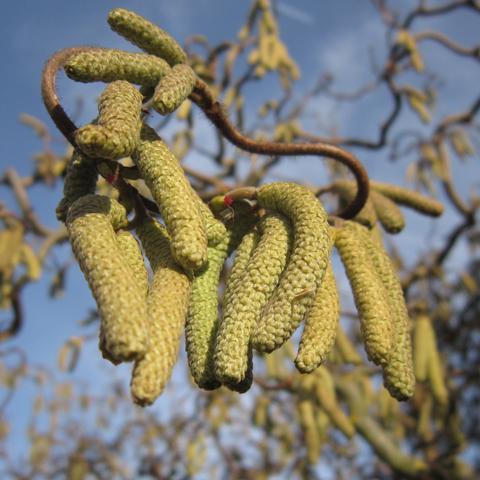 Pollen alert! Ondersteunen van je dier kan nog steeds_foto_pixabay