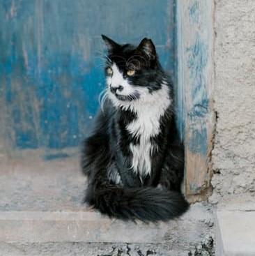 Kat met plukkerige vacht