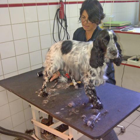 Hondenprofessionals met passie Norina Pauletta blog NML health
