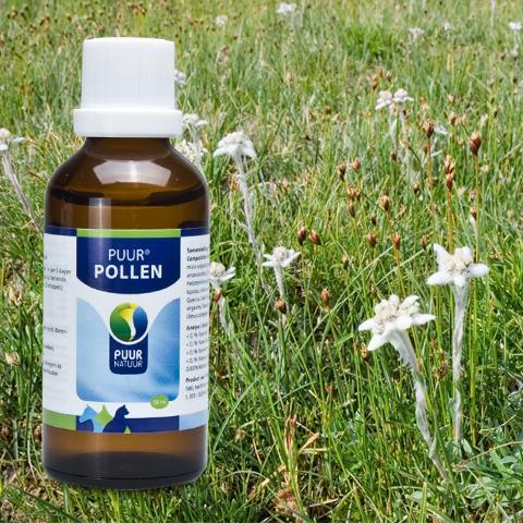 PUUR Pollen bij gevoeligheid voor stuifmeel in de lucht