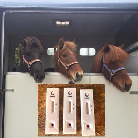 TetaCheck IJslandse paarden NML health