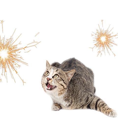 Blij met vuurwerkverbod: einde aan knallers en vuurpijlen