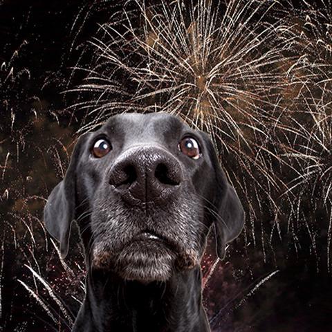 Vuurwerkangst bij hond dierenarts Evelien van der Waa NML health