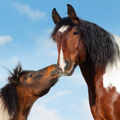 knuffelende pony's