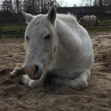 Contessa_NMLhealth_oud_paard
