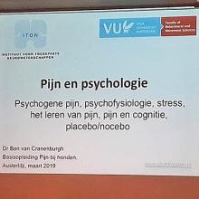 Presentatie 'Pijn bij honden' deel 2