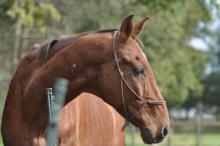 Paard Ike_nmlhealth